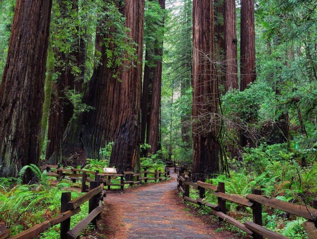 Muir Woods - Airbnb Neighborhood Photos